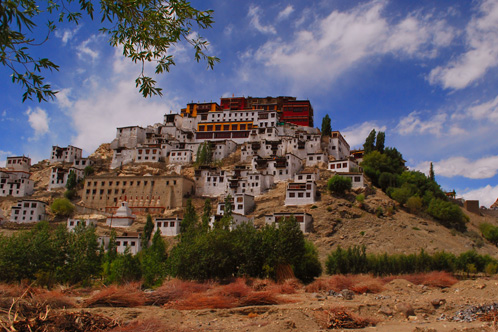 Ladakh_Rustik_Travel_498_332