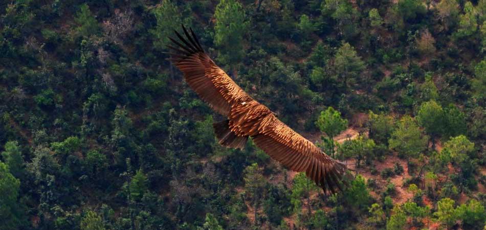 Big_bird_Rustik_Travel