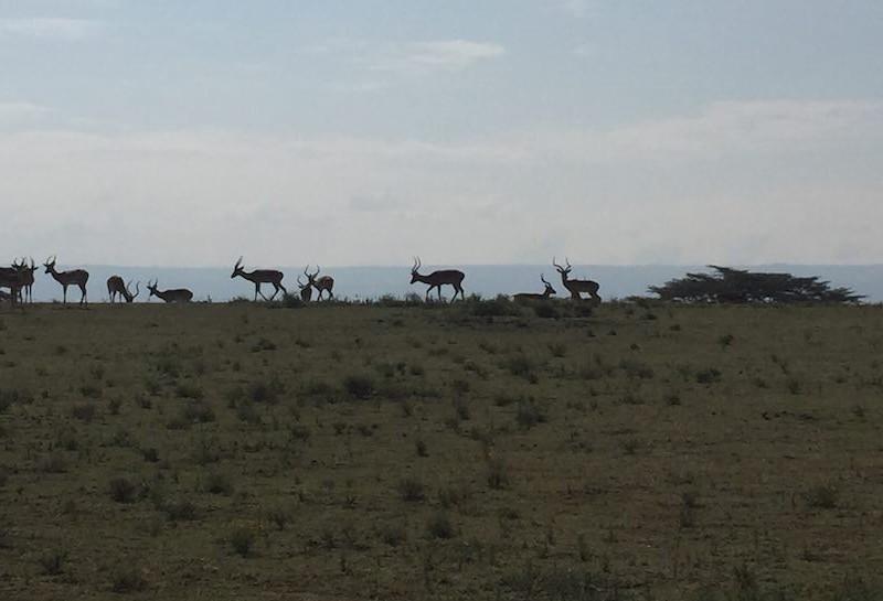 African_Safari_Exp_Rustik_Travel