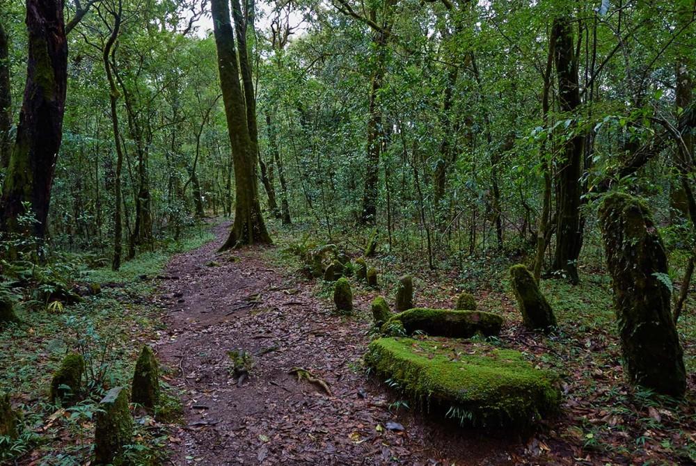 Mawphlang Sacred Grove